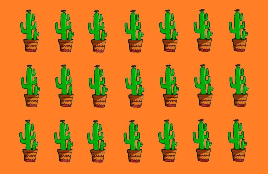 Тест: скажите, какой из этих кактусов не похож на других