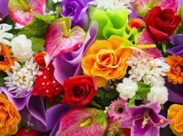 test-kak-xorosho-vy-znaete-cvety